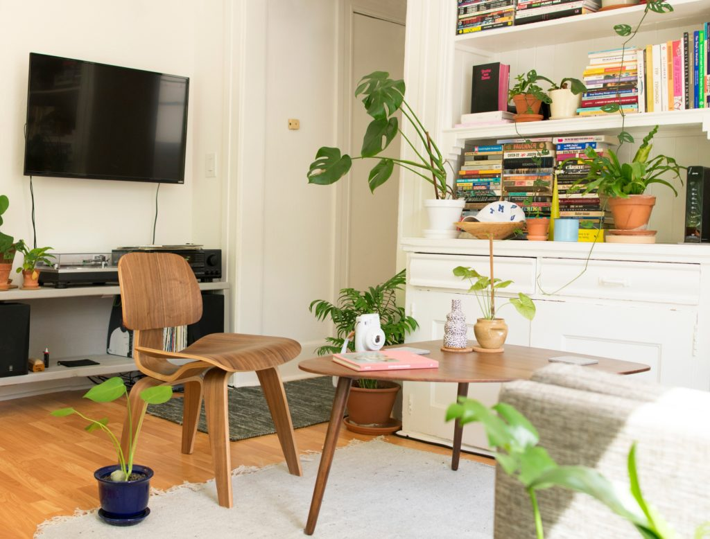 Living room decor with plants